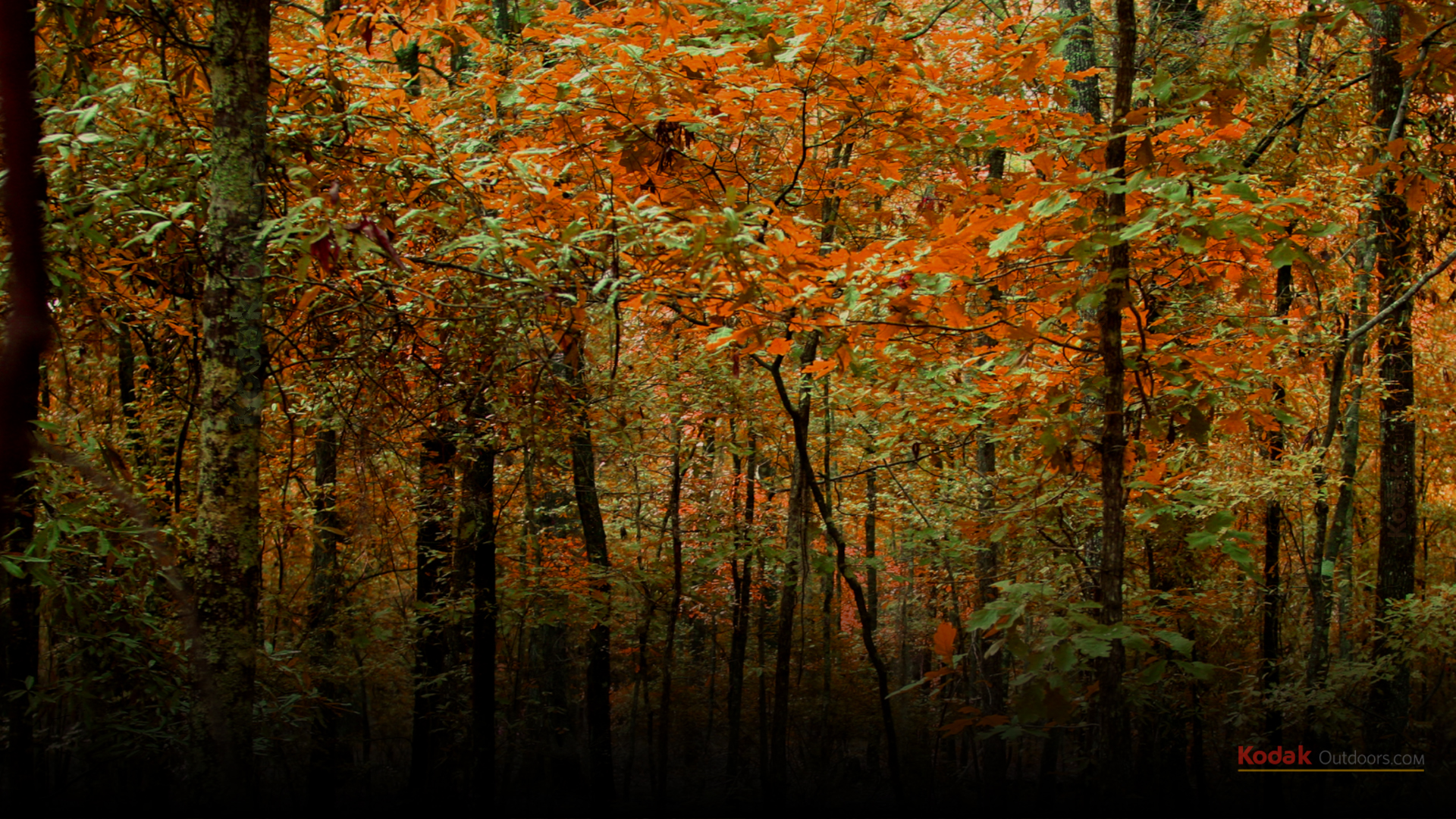hunting backgrounds wallpaper 229746